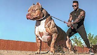 Dein Hund sollte nichts von diesen Rassen erfahren! Die gefährlichsten Hunde der Welt