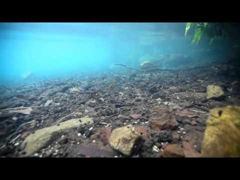 Matano 150 meter underwater.m4v