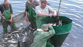 Рыбаки и Подводные Охотники Таскают Рыбу Мешками в Нерест