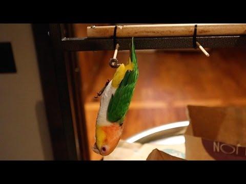 Triple Flip Bird