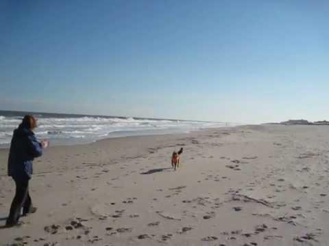 Bethany Beach, Delaware With My Dog Heidi