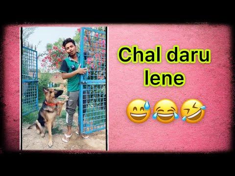 Chal daru lene ?funny dog video | #shorts | Akash comedy
