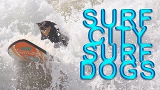 World's Best Surfing Dogs Compete in Huntington Beach