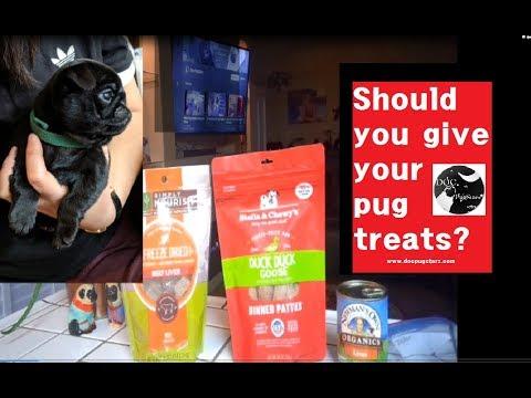 pugs-101:-feeding-tips---treats