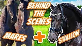 WE ARE MAKING BABIES! - Pąrt 1 (Horse Breeding) Animal Breeding | Horse Transformation