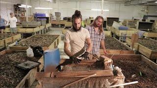Tour a Commercial Worm Farm!