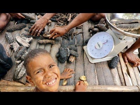 Papua New Guinea: Sea Cucumber Season