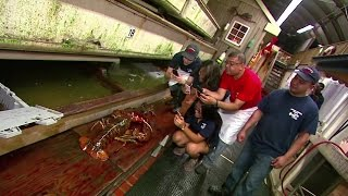 New York restaurant spares life of 95-yr-old lobster