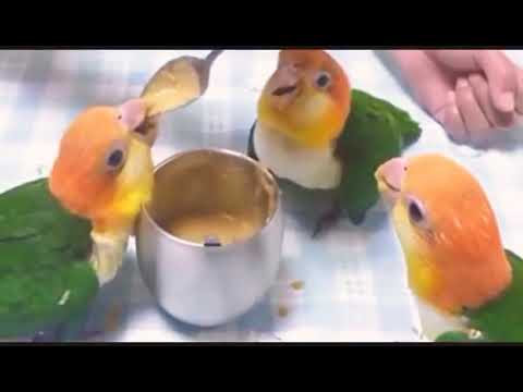 Cute birds video   cute bird feeding  whatsapp video status