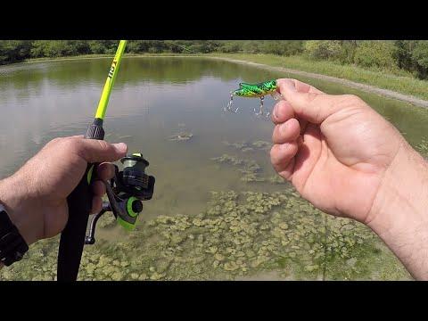 Pond Hopping With The Rebel CrickHopper!