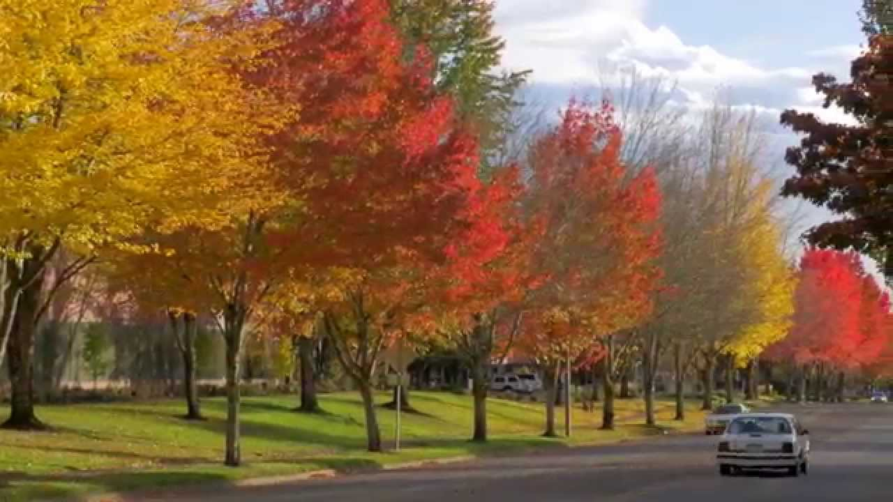 Free Fall Color Wallpaper Fall Color Around Portland In 4k Youtube