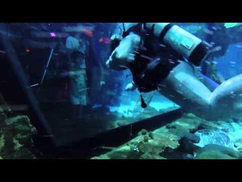 Mandalay Bay Shark Dive