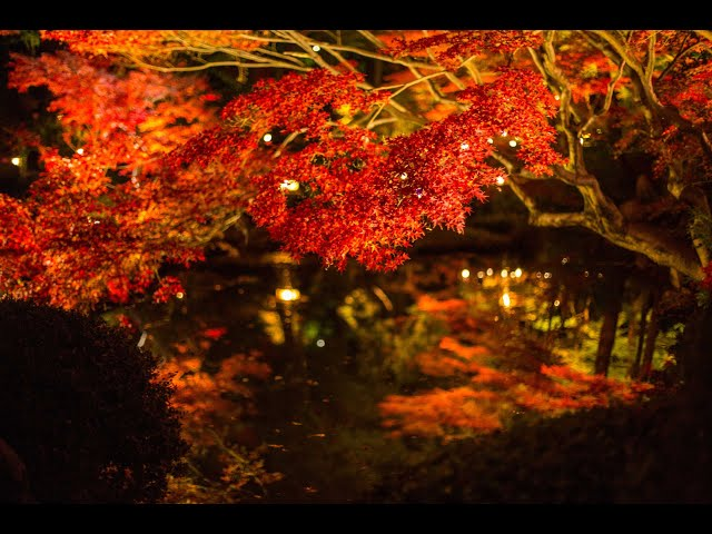 JG HDR 京都 金戒光明寺の夜紅葉(名勝,重文) Kyoto,Konkaikomyoji Momiji Light Up(Scenic Beauty,Cultural Property)