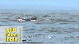 Fishing boats on Arabian sea: Neendakara, Kerala