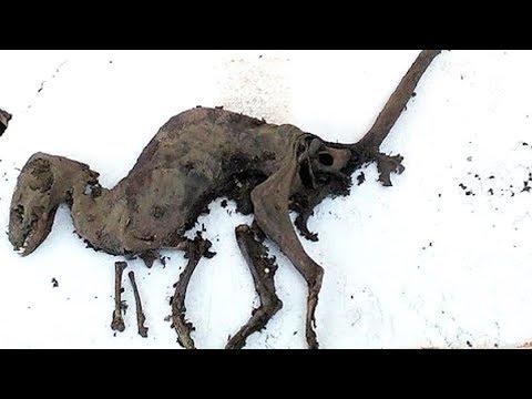 Researchers Find Dinosaur With Flesh STILL On Its Bones