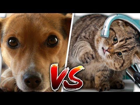 #Team Hund VS. #Team Katze