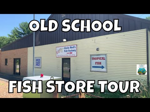 OLD SCHOOL Local Fish Store Tour Uncle Neds Fish Factory