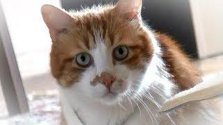 ウロウロする様子が可愛くて笑ってしまう 知らない猫さんと会うことに慣...