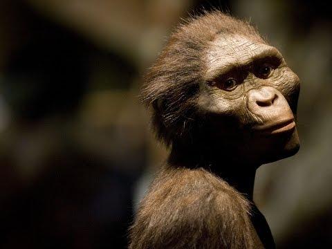 El día que los Beatles ayudaron a la ciencia: Lucy, la australopithecus