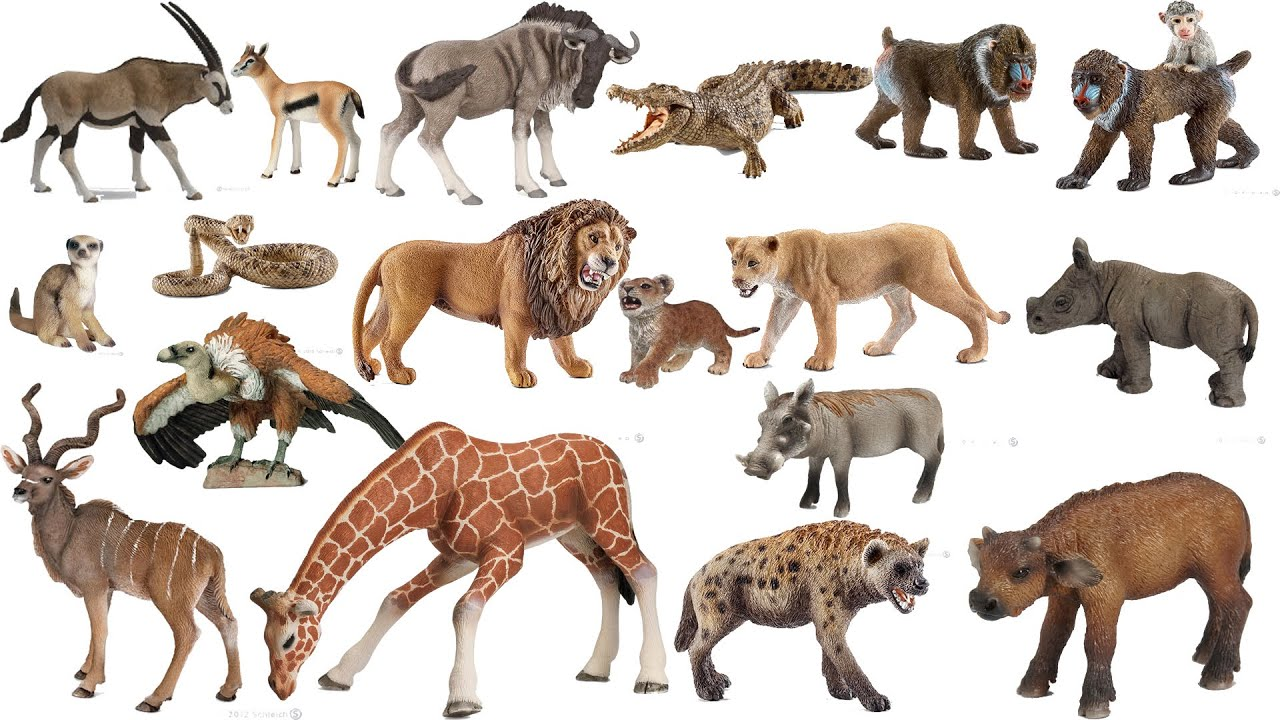 Toys From Africa : Schleich papo animals african savanna safari zoo toys
