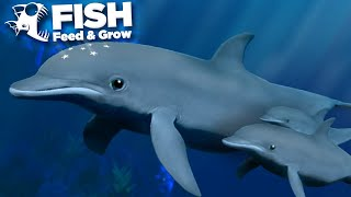 Download lagu THE GIANT DOLPHIN POD!!! - Fish Feed and Grow   HD