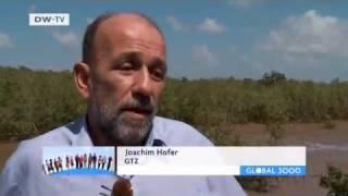 Coastal Conservation in Vietnam | Global Ideas