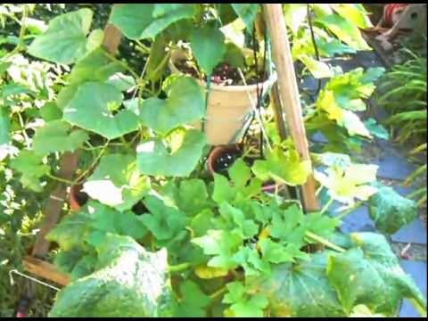 Above Ground Container Vegetable Garden Using Rainwater