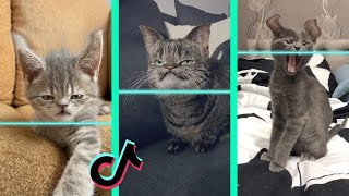 Time Warp Scan tiktok cat compilation (filter tiktok)
