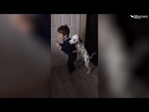 Dalmatian Adores 5-Year-Old So Much He Won't Let Him Leave For School