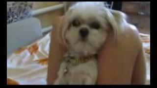 Моя собака ромео и вика