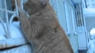 russian lover cat