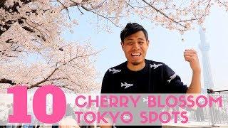 Baixar Top 10 Cherry Blossom Tokyo Spots   Sakura watching and Hanami Guide