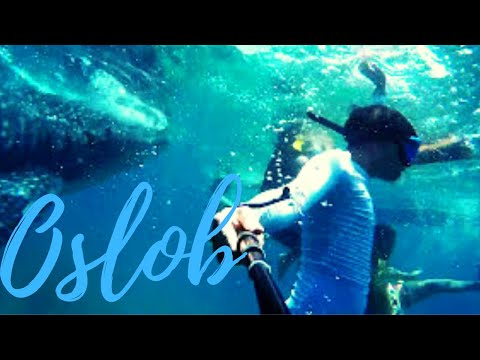 WHALE SHARK DIVING (Ep12) Philippines Backpacking Part6