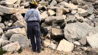Fema Canine Search Specialist Workshop