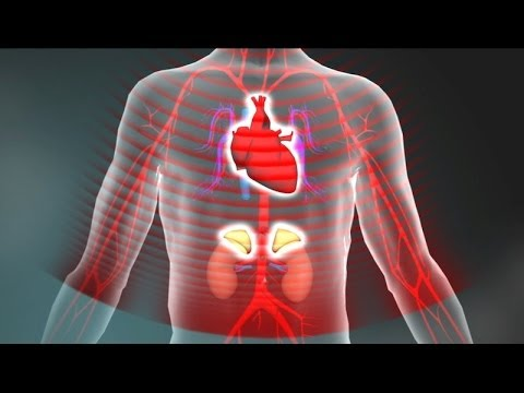 3. Toxic Stress Derails Healthy Development