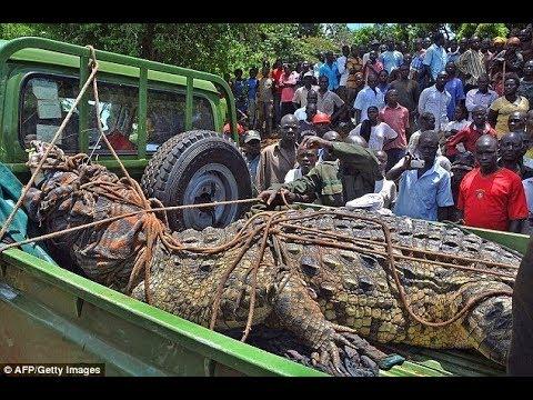 Download TBC1: Mchungaji Amezwa na Mamba, Alikuwa Akibatiza Waumini