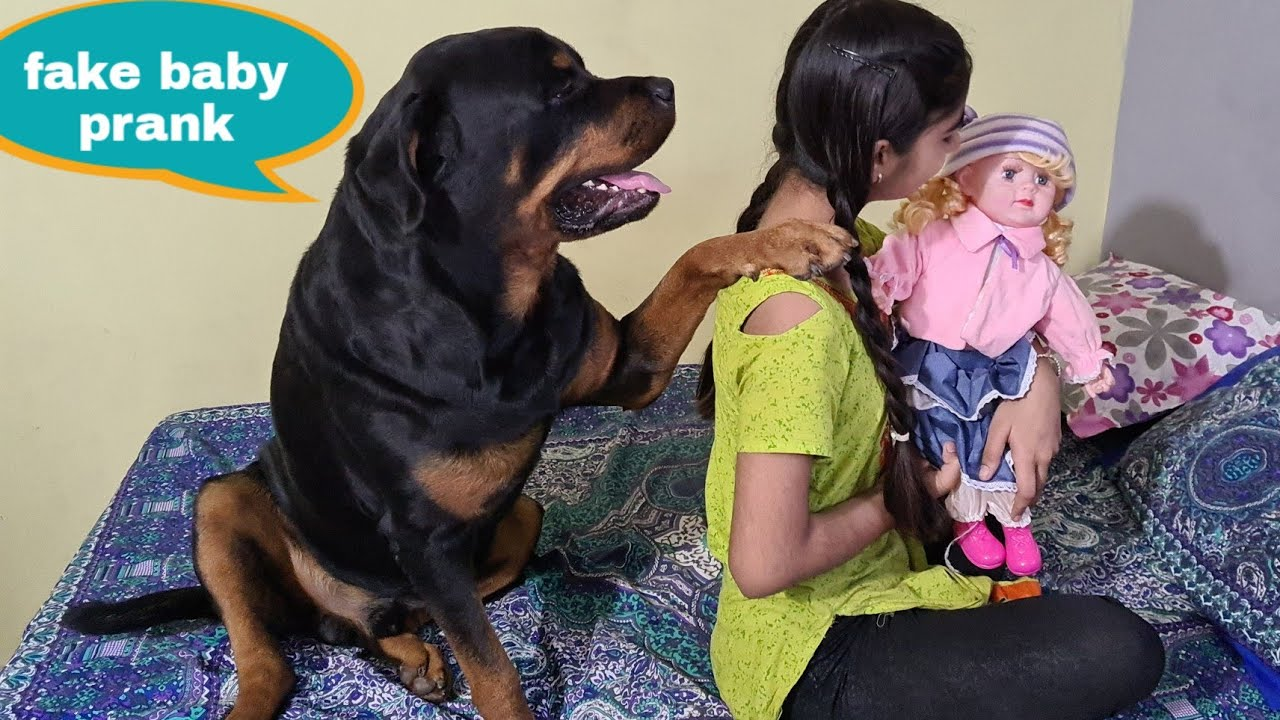 Dog protecting baby||fake baby prank||Best guard dog breed.
