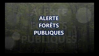 Alerte forêt publique