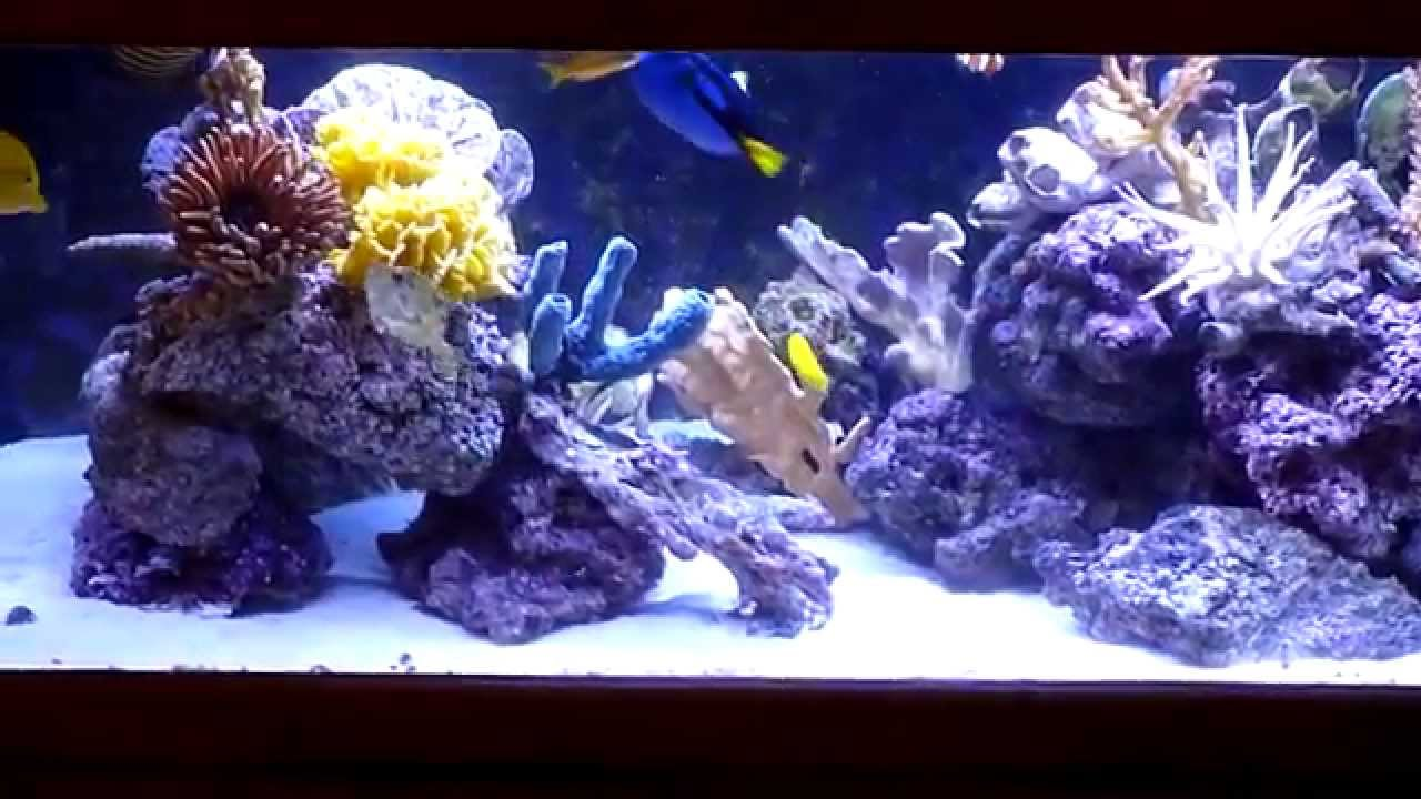 Decorative saltwater aquarium shows how colorful for Artificial coral reef aquarium decoration inserts