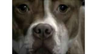 How Stress is Sabotaging Your Dog Adoption Efforts