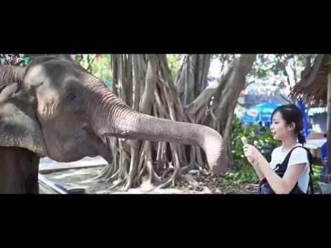 Thailand Travel Trip Tourism 2016