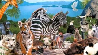 Мой фильм про животных