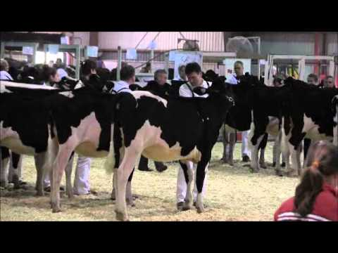 2012 Eastern Ontario - Western Quebec Championship Show - Class 4