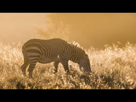Night nature sounds: Mountain Zebra NP | African wildlife & animal noises, Africa safari
