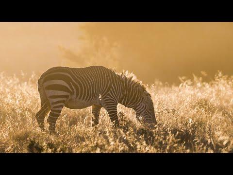 African night sounds | Mountain Zebra National Park - Wildlife