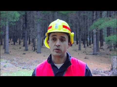 Forest renewable energy study