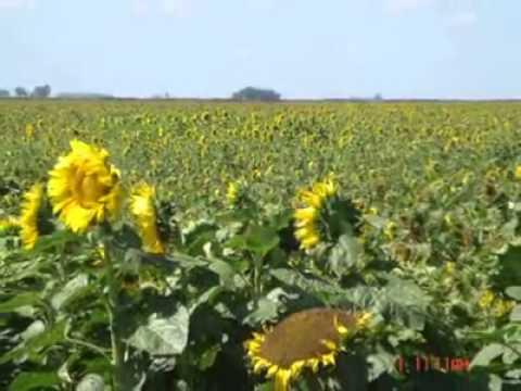 farming in argentina / cosecha  y campo argentino