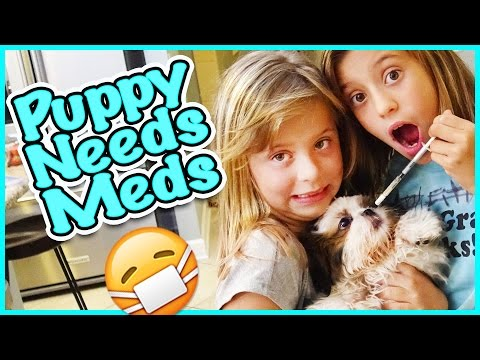 😷 OUR PUPPY HAS A PARASITE 😷 ENZO'S PET STORE HAUL! SMELLY BELLY TV VLOGS