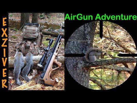 Air Rifle Gray Squirrel hunting 4