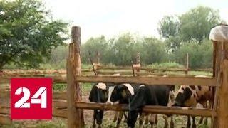 В Амурской области дальневосточные гектары все чаще берут